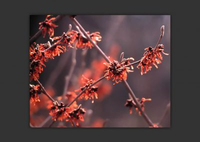gallery_winter_spring_01
